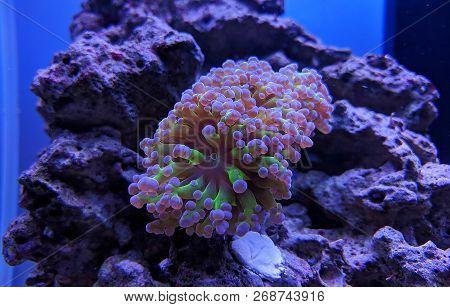 Underwater A Marine Aquarium With Purple Corals