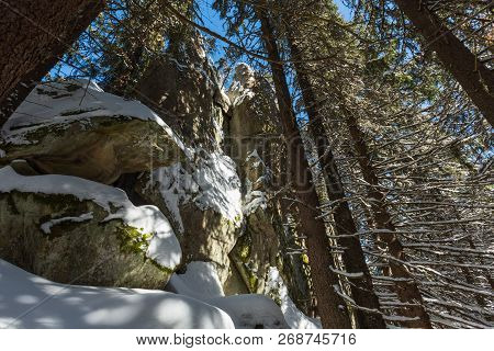 Sunny Winter Day Snow Covered Stony Boulder Rock View In Wild Fir Forest. Picturesque Hungarian Ston