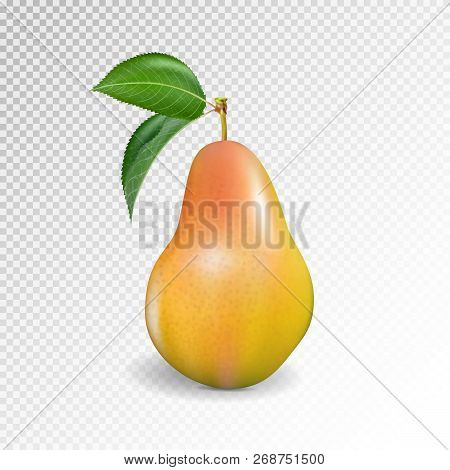 Pear Realistic. Vector 10eps. Pear, Punching Bag, Punching Ball, Punchbag, Punchball. 3d Illustratti