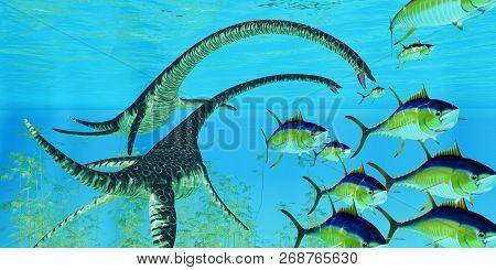 Aquatic Reptile Elasmosaurus 3d Illustration - Yellowfin Tuna Try To Escape The Jaws Of Two Elasmosa
