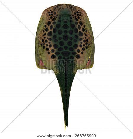 Drepanaspis Fish Back 3d Illustration - Drepanaspis Was A Ray-like Flattened Fish That Lived In Euro