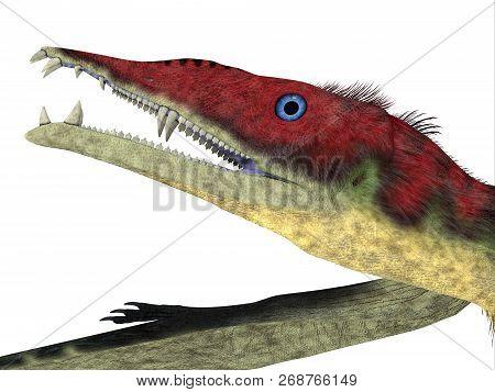 Eudimorphodon Pterosaur Head 3d Illustration - Eudimorphodon Was A Carnivorous Pterosaur Bird That L