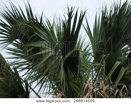 Palm Trees In Texas Work Well For Residential And Commercial Establishments.