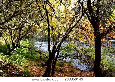 Atumn Colours In The Forest. Background With River, Trees, Path And Exuberant Vegetation. Yellow And