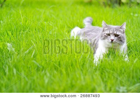 A cute cat relaxing on the grass in the garden poster