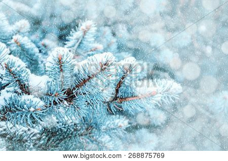 Winter Christmas landscape. New Year and Christmas background, blue pine tree branches under winter snowfall, closeup of winter forest nature, free space for New year and Christmas text