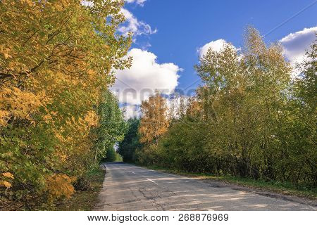 Asphalt Road Among The Yellow Trees In Autumn Sunny Day.