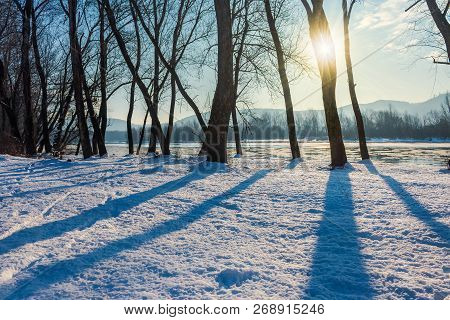 Winter Scenery Near The River. Dark Naked Trees On A Snow Covered Bank