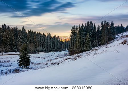 Coniferous Forest On The Snowy Hill At Sunset. Beautiful Winter Scenery In Cold Weather Conditions.