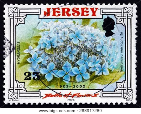 Jersey - Circa 2002: A Stamp Printed In The Jersey Shows Hydrangea (hortensia), Flowering Plant, Cir