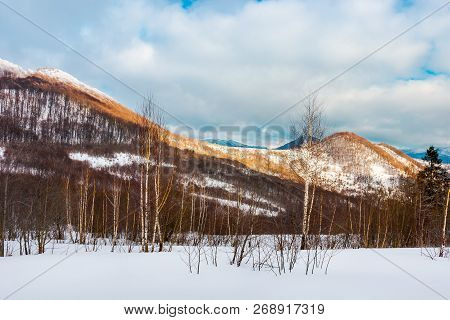 Birch Forest On The Snowy Slope. Lovely Landscape In Mountains On A Cloudy Winter Evening