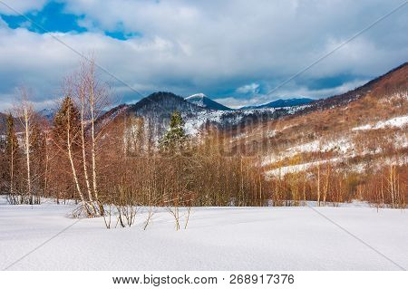 Winter Landscape Of Uzhanian National Nature Park. Leafless Birch Trees On Slopes. High Mountain Wit