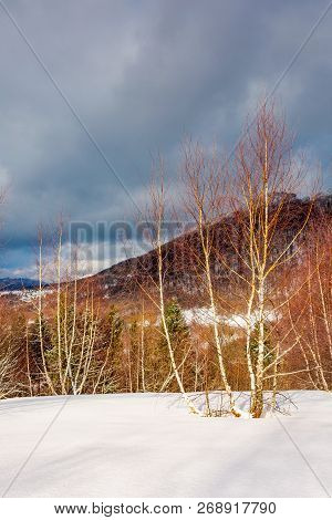 Dramatic Winter Scenery In Mountains. Leafless Birch Forest On A Snowy Slope In Sun Light. Distant M