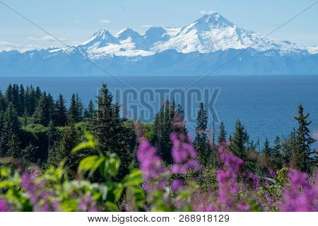 Clear View Of Mount Redoubt From Anchor Point Alaska On A Sunny Day. Fireweed And Trees In The Foreg