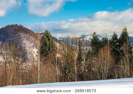 Forest On The Snowy Slope. Lovely Nature Scenery In Mountains On A Cloudy Winter Evening