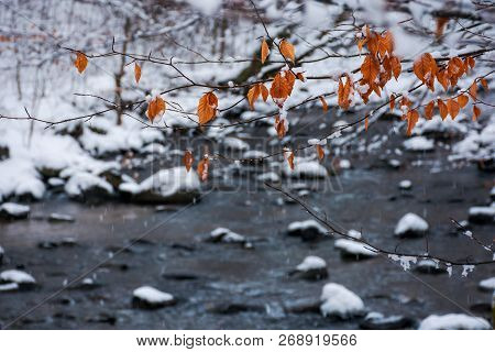 Twig Above The Forest Stream In Winter. Weathered Brown Foliage Covered In Snow