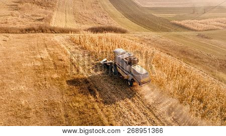 Aerial View Of Agriculture Industry. Combine Collecting Corn