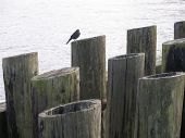 bird sitting on a pier off the san francisco bay poster