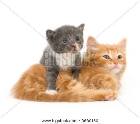 Two Baby Kittens ( One In A Series)