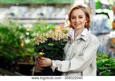 Woman Customer Shopping In A Greenhouse, Holding A Pot Of Hydrangea Or Hortensia Flower, Choosing A