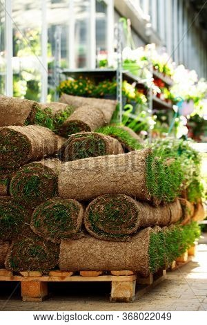 Roll Out Turf Lying On Pallet In Flower Shop, Laying New Lawn In Garden, Lawn Maintenance. Buying Gr