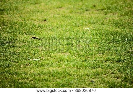 Top View Of Bright Grass Garden Idea Concept Used For Making Green Backdrop, Lawn For Training Footb