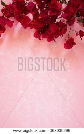 Tropical Magenta Bougainvillea Flowers Border On Modern Pink Textured Background