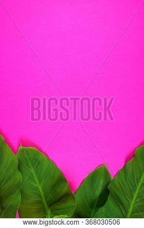 Colorful Summer Flat Lay With Tropical Leaves On Bright Pink Background