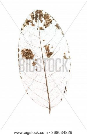 Leaf Veins Over White