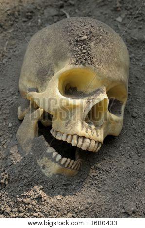 Human Skull In Dirt