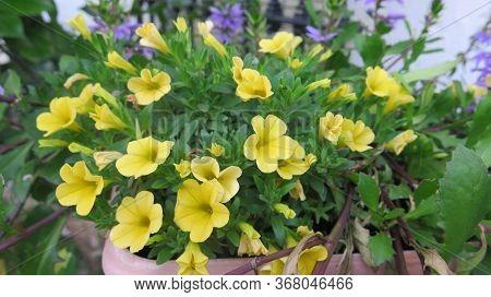 Flowers On Railing