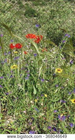 Widflowers Behind Fence