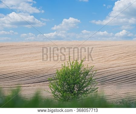 Pictured Leaving Afar Neat Rows Of Potato Field