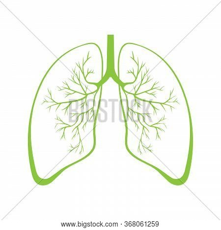 Human Green Lung Anatomy. Respiratory Tract Disease. Respiratory Systems. Vector Illustration
