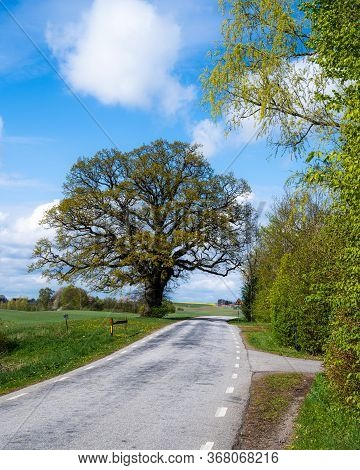 A Majestic Oak Tree Stands Next To An Empty Rural Country Side Road, Giving A Tranquil Feel, In The