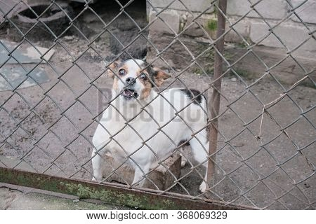 Dog Look At Outside Standing Behind The Fence