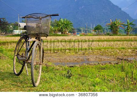On bicycle tour through Vietnam . Here right on the rice field