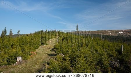 Path On Forested Hill With Mountain Ridge In The Background, Jeseniky, Czech Republic