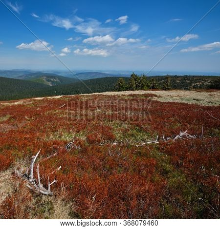 Forested Mountainous Landscape With Colorful Red Vegetation In The Foreground, Jeseniky Mountains, C