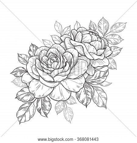 Hand Drawn Rose Flowers And Leaves Bunch Isolated On White. Vector Monochrome Elegant Floral Composi