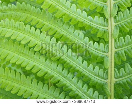 Foliage Fern. Stalks And Leaves. Light Green Patterned Wallpaper. Natural Horizontal Background With