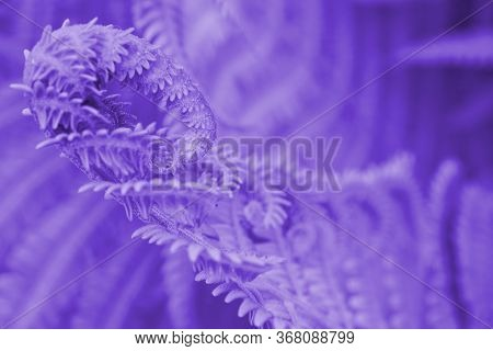 The Blossoming Head Of A Fern. A Dark Purple-tinted Floral Pattern. The Stems And Leaves. Violet Bac