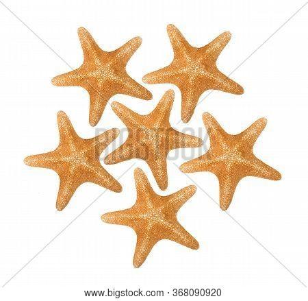 Orange Seastars Isolated On A White Background