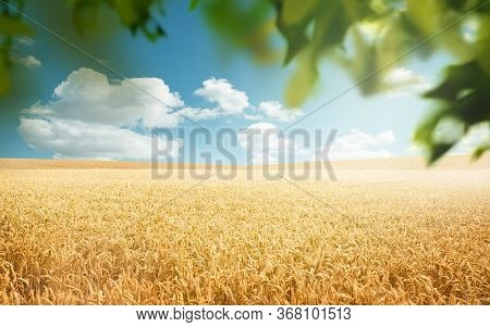 Golden Wheat Fields Rolling Into The Horizon In The Countryside On A Sunny Day Framed By Green Leave