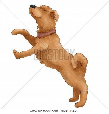 Funny Shaggy Dog Breed Wheat Terrier. Puppy Illustration Isolated On White Background.