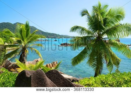 Coconut palm trees near Grand l'Anse beach in La Digue island, Indian Ocean, Seychelles. Tropical landscape with blue sunny sky.