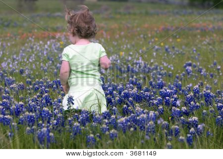 Toddler In Bluebonnets