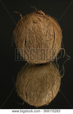Large Shaggy Coconut Isolated On A Black Mirror Surface With Reflection. Coconut On Black.