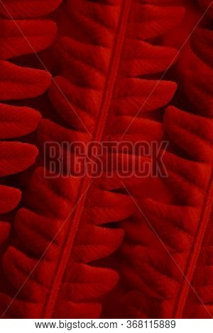 Fern Foliage. Deep Red Tinted Plant Tracery. Stalks And Leaves. Natural Vertical Background Or Wallp
