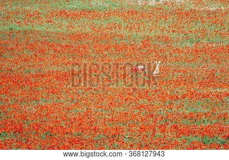 Two Girlfriends Take Pictures In Poppy Field, One Lies On Its Back With Its Legs Raised. Beautiful F